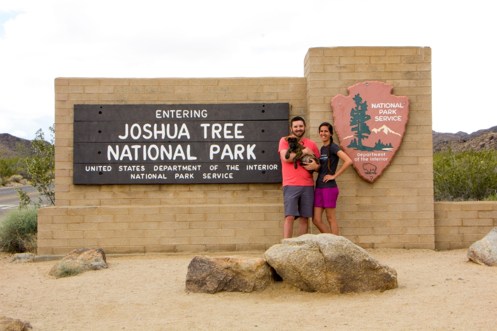 Joshua Tree Sign